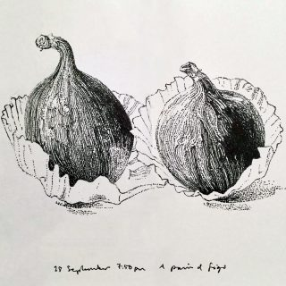 Two figs © John Hewitt